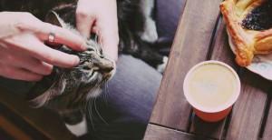 pop up kitten cafe